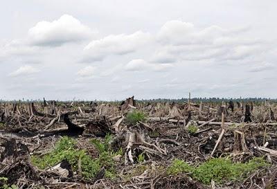 deforestation-massive