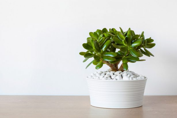 Faire briller les plantes