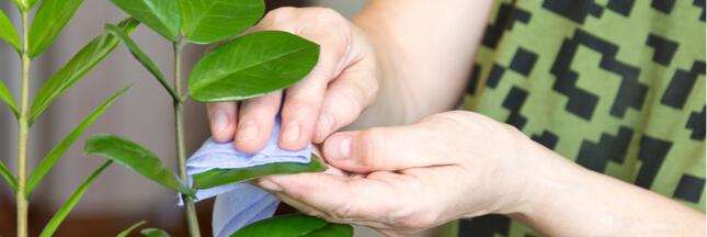 faire briller les plantes, nettoyer feuilles plantes vertes