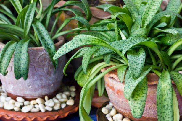 dépoussiérer les plantes