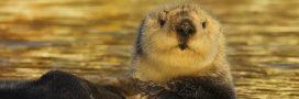 Insolite. Le Guiness des records des animaux!