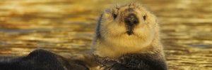 Insolite. Le Guiness des records des animaux !