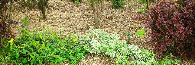 R alisez un paillis naturel pour un beau jardin page 2 for Realiser un beau jardin