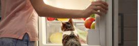 Comment entretenir son réfrigérateur naturellement?