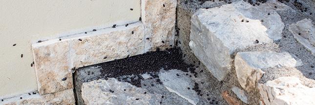 Cet été, repoussez les insectes naturellement !