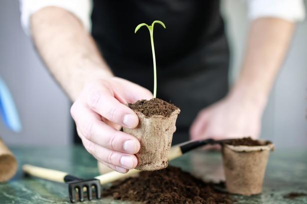 variétés anciennes, semences
