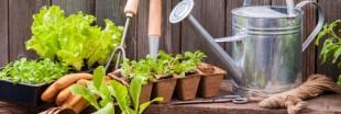 Kokopelli au secours des variétés anciennes de légumes