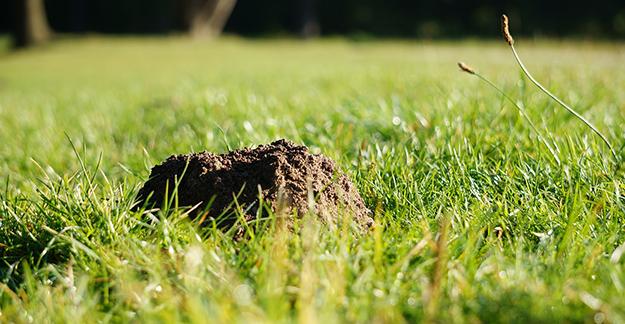 7 astuces naturelles pour chasser les taupes - Comment chasser les taupes du jardin ...