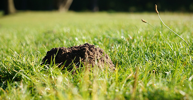 chasser les taupes, astuces-naturelles-contre-les-taupes-jardin-bio-01