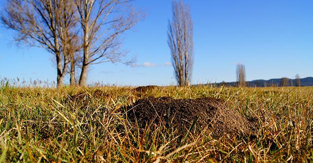 chasser les taupes, astuces-naturelles-contre-les-taupes-jardin-bio-02