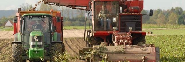 La chicorée française en route vers l'agriculture responsable