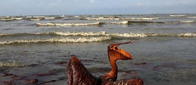 maree-noire-petrole