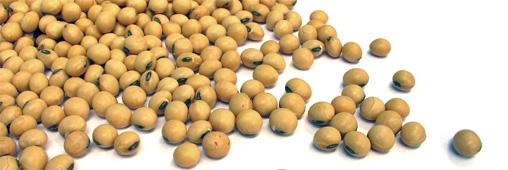 Alimentation. Faut-il bannir la lécithine de soja ?