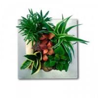 tableau-végétal