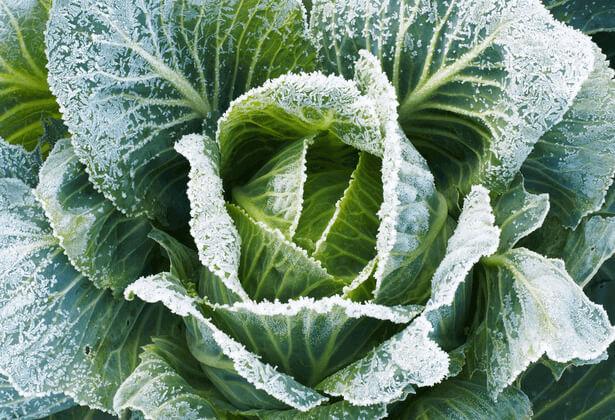 protection plantes contre le gel, protéger jardin gel