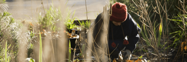jardin maladies hiver