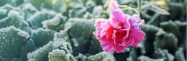 Astuces pour protéger son jardin contre le gel