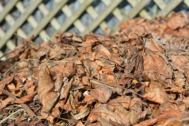 compost en hiver, recyclage, jardin