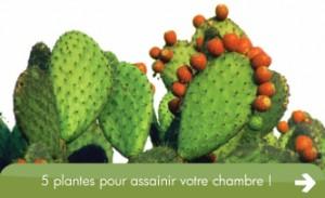5-plantes-intérieur-depolluantes