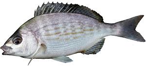 guide-d-achat-poisson-dorage-grise