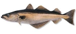 guide-d-achat-poisson-lieu-noir