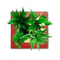 plante-dépolluante