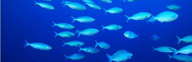 poissons-menacé_shutterstock_59924854