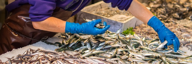 Guide d 39 achat du poisson quelles esp ces acheter for Acheter poisson
