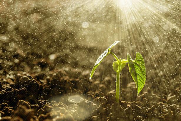eau sur terre plantes agriculture