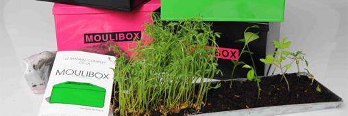 Moulibox : le mini-composteur d'intérieur