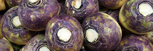 Légumes oubliés : plaidoyer pour le rutabaga