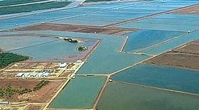 aquaculture-crevettes-madagascar