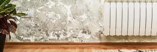 Combattre les moisissures dans votre habitat