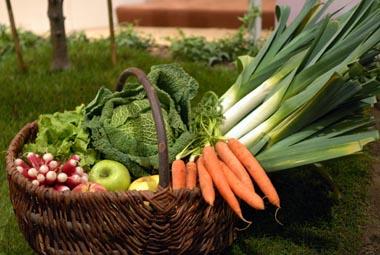 Panier légumes illustrant BIO CABAS