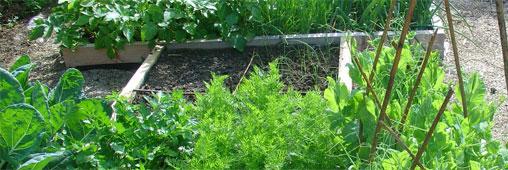 Jardins partagés: un outil pédagogique surprenant