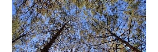 Photobox et l'ONF : un arboretum dans les Landes