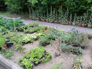 potager jardin bio jardinage mois de mai printemps conseils pratiques