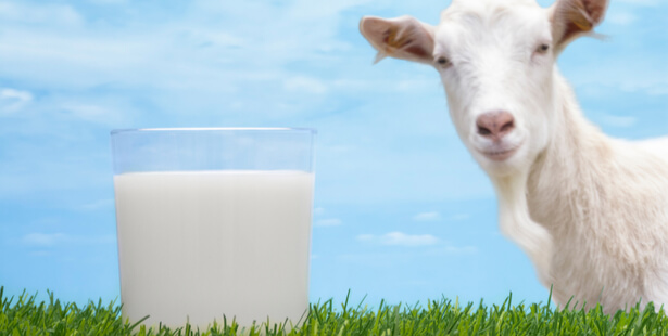 Lait de chèvre et brebis