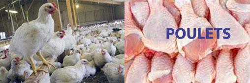 Poulets : vers un nouveau scandale alimentaire ?