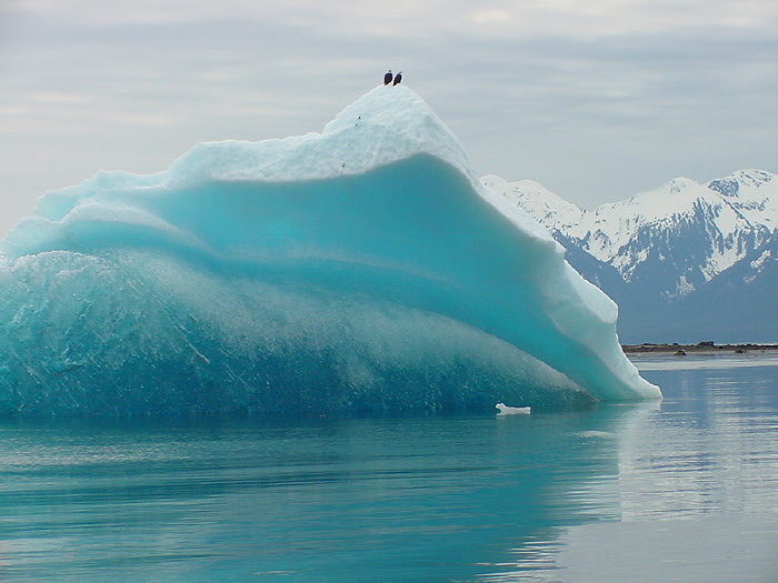 Eagles_Iceberg
