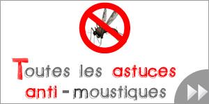 géranium odorant pélargonium contre les moustiques