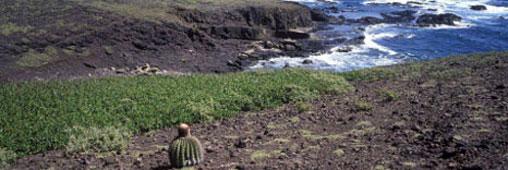 La Désirade, nouvelle réserve naturelle en Guadeloupe