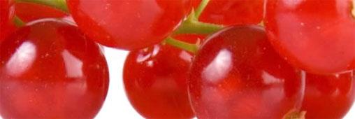Les fruits rouges, des superfruits made in ici