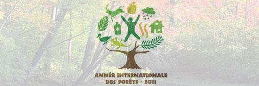 Tourisme vert. Les activités nature pour célébrer l'Année des Forêts
