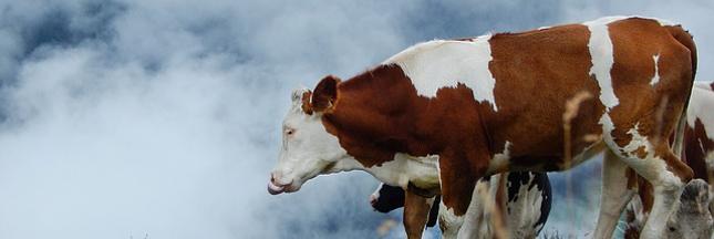 Bleu-Blanc-Coeur : un élevage pensé pour des hommes en meilleure santé