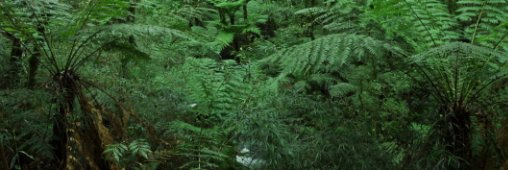Congo. Plus d'un milliard d'euros pour agrandir la forêt