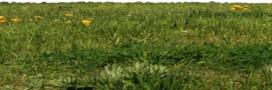 Les astuces anti mauvaises herbes