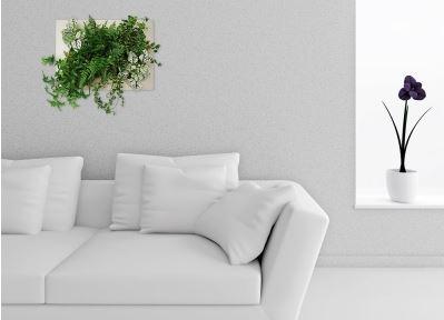 cadres-végétaux-décoration
