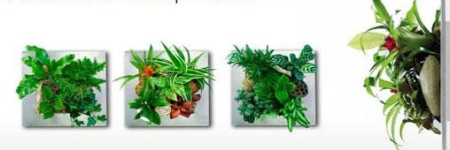 Cadres végétaux, explications d'un succès