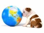 chien et planète